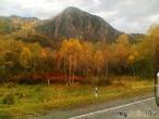Осень ярко-рыжей кошкой ходит-бродит вдоль дороги