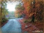 Осень под Брянском