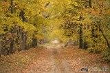 Золотая осень манит..