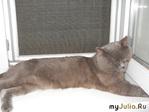О котах-мутантах и замученных счастливых хозяевах