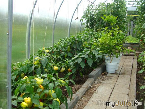 популярные домашние растения фото и название