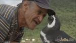 Дивовижна історія про дружбу людини і тварини, вдячність і відданість!