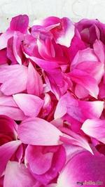 Продолжение цветочной темы. Дачные цветы.
