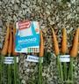 Своя морковь: начало июля