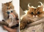 15 неоспоримых доказательств того, что коты растут ну очень быстро