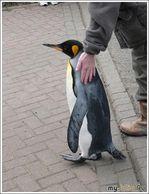 Пингвин и Коля.