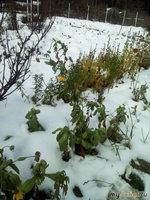 Октябрьский снегопад.