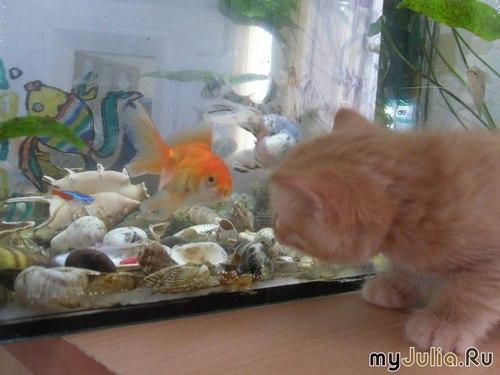 """""""Приплыла к нему рыбка, спросила..."""""""