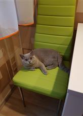 знакомство с новой мебелью