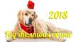 Как встретить Новый год 2018?