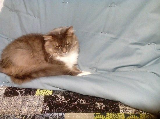 кот, который всегда со мной