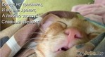 Из кошачьей жизни