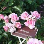 Своя клубника, красивые розы и северные олени в Москве – нескучный Инстаграм руководителя «МедиаФорт»