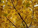 Что такое осень - это... листья ))