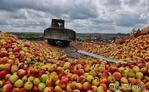 Яблоки для бармалеев