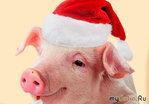 Поздравление от Свинки с Новым годом