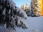 Зимние фоточки...бррр...