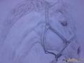 Портрет белой лошади в полуобороте