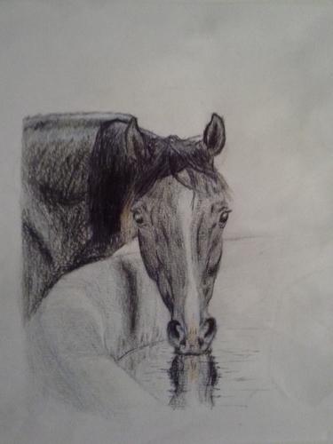 Лошадь, пьющая воду