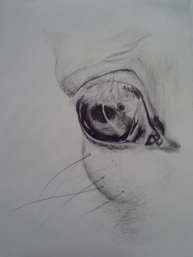 Лошадиный глаз