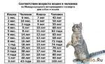 Параллель между человеческими годами и кошачьими