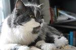 Письмо-воспоминание кошке