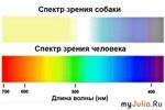 Спектр собаки и человека