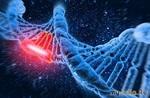 У мужчины после пересадки костного мозга обнаружили в сперме чужую ДНК