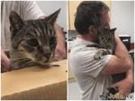 Трогательная встреча мужчины с котом после 7 лет разлуки (6 фото + 1 видео)
