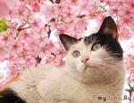 Весна, весна - котам дорогу!