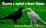 Притча о чёрной и белой вороне