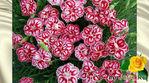 Цветок имени Светлана