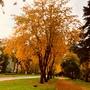 Тихой Осенней Порой..... 2020 года
