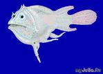 Удивительная рыба морской чёрт или удильщик...