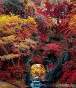 Осень, как она есть...)))