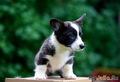 25,07,19 Зоненвельт Огненный Вихрь (Коржик), фото Ксении Романовой