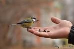 Приручённый птицами