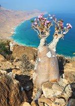 Сокотра: самая странная природа на планете