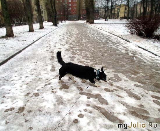 Февральская прогулка