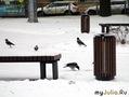 Питерские вороны
