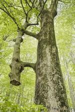 Это не просто дерево.
