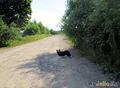 Лиза в деревне